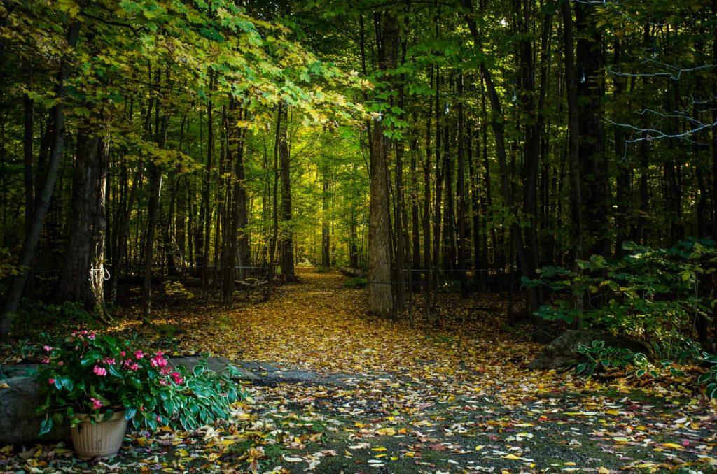 Promenade dans le boisé et mariage
