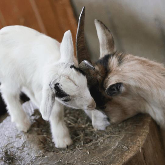 Mini Ferme D'animaux